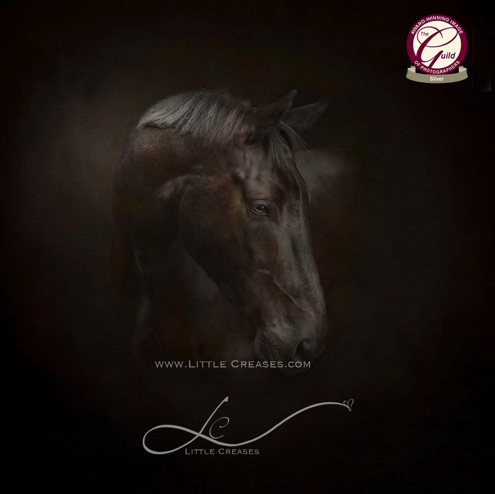 Leicester Pet Photographer,Jules Photography,Horse Portrait,pet Portraits,Bronze award,The Guild,Animal Portraits,Award winning pet portraits